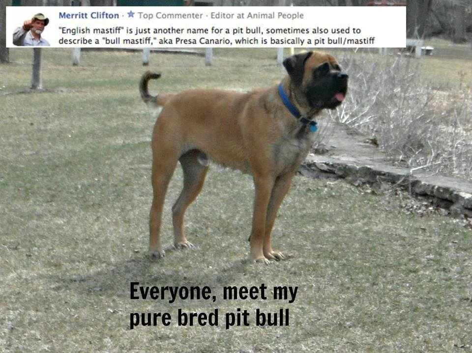 Why do people fabricate names for mixed breeds?