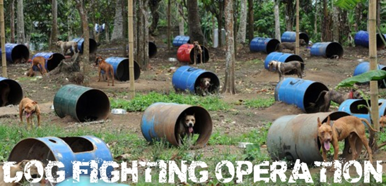 dog_fighting1